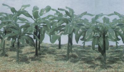 6509 - Banana Trees